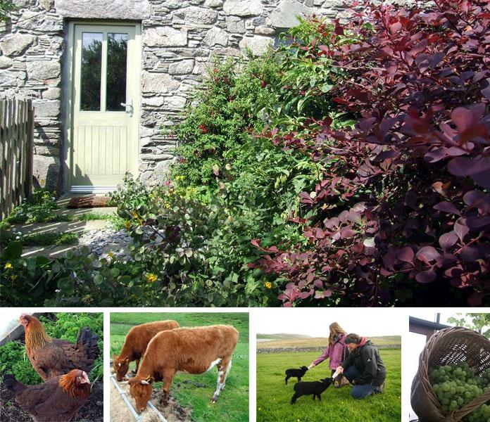 Shetlands – Organic Croft House